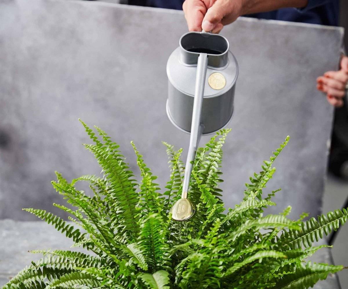 Уход за комнатными растениями зимой: полив, подкормка, подсвечивание и температура