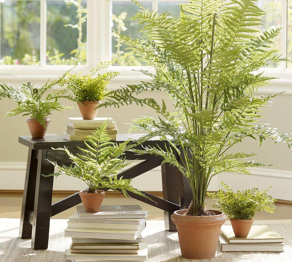 Напольные цветы для дома (23 фото): виды больших комнатных растений. примеры домашних крупных цветов на полу в интерьере