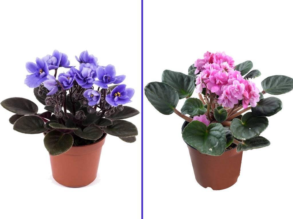 Комнатные цветы, цветущие круглый год