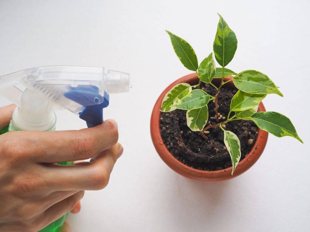 Удобрения комнатных растений в домашних условиях