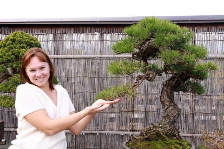 Как сделать толстый ствол бонсай — все о бонсай на mirbonsai.com