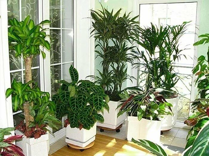 Какие растения нельзя держать дома по приметам