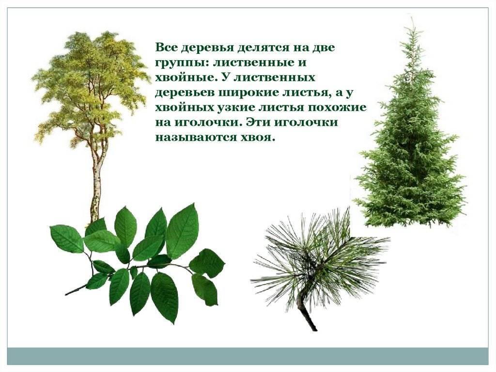 Хвойные и лиственные леса