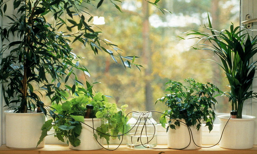 21 вид неприхотливых комнатных растений для дома