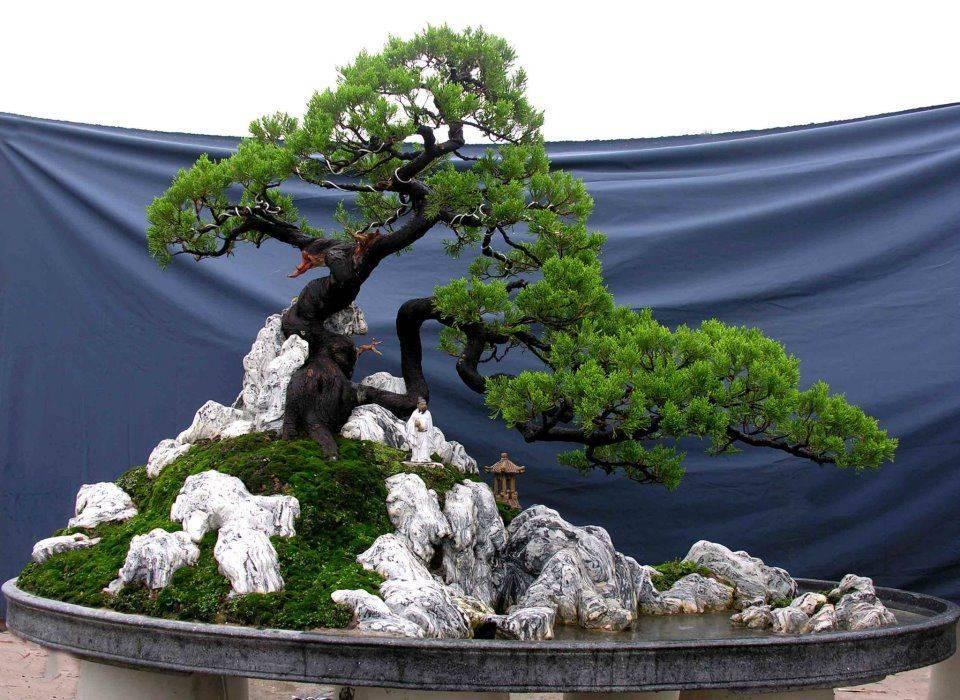Искусственный бонсай: 5 советов для живого интерьерного уголка