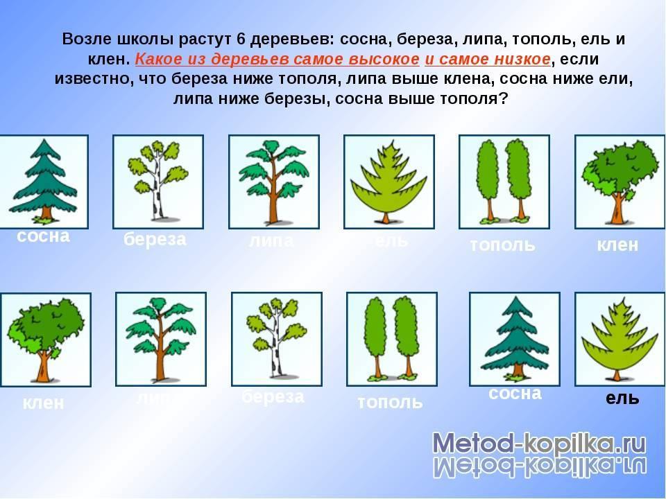 Вечнозеленое дерево кипарис пирамидальный: это хвойное или лиственное дерево
