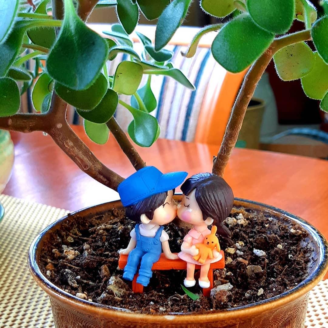 Цветок любви: комнатные растения для счастья, удачи и любви