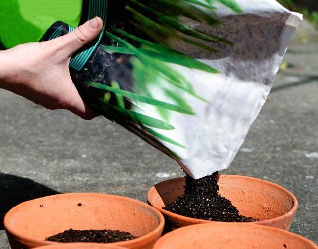 Грунт для антуриума — какая земля нужна для цветка