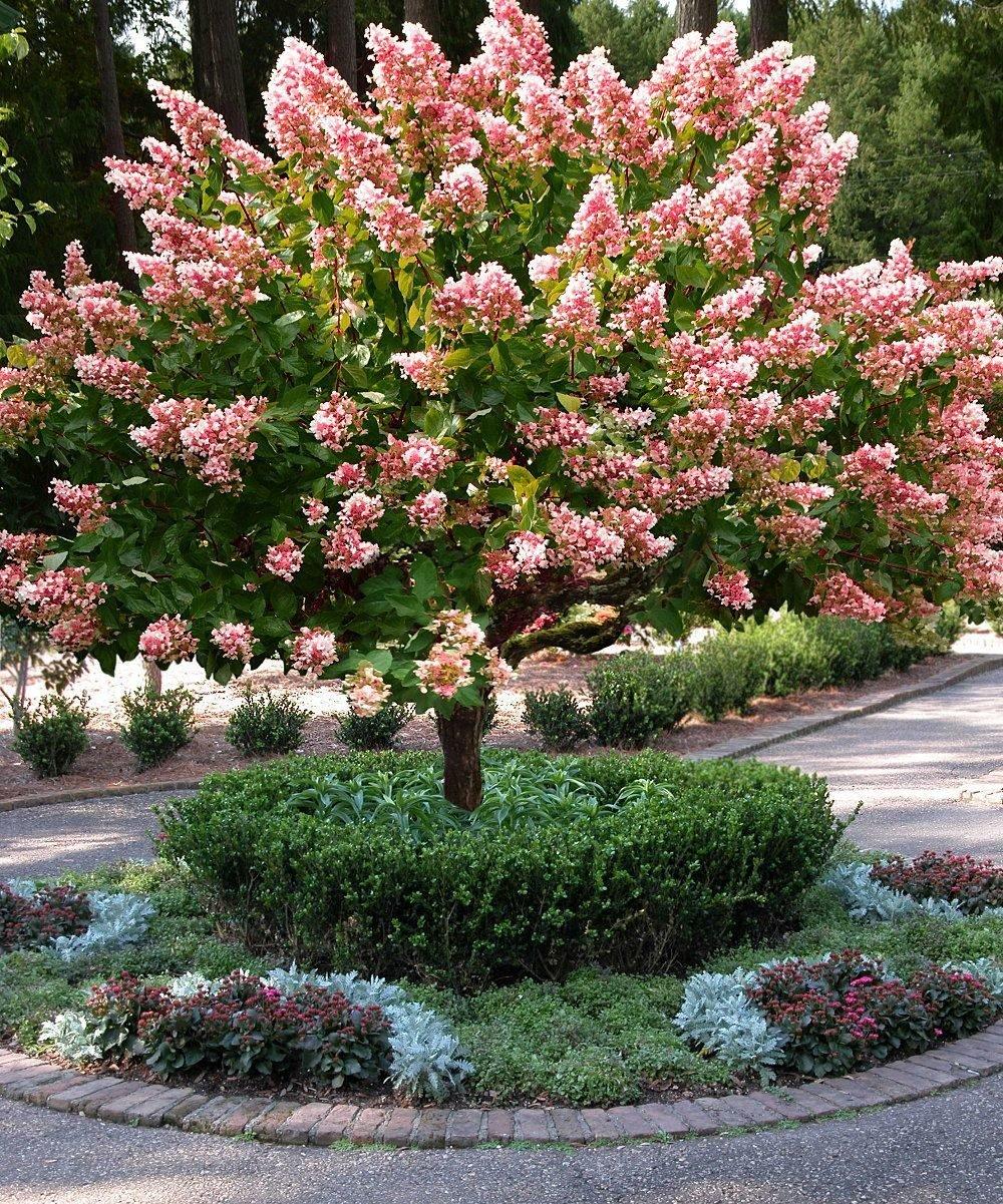 Самые красивые деревья для подмосковья. самые красивые кустарники и деревья для подмосковья. мой рейтинг