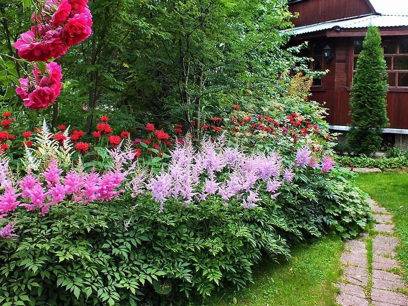Лилейники в ландшафтном дизайне (44 фото): посадка на дачном участке с ирисами, хостами и другими цветами на клумбе в саду