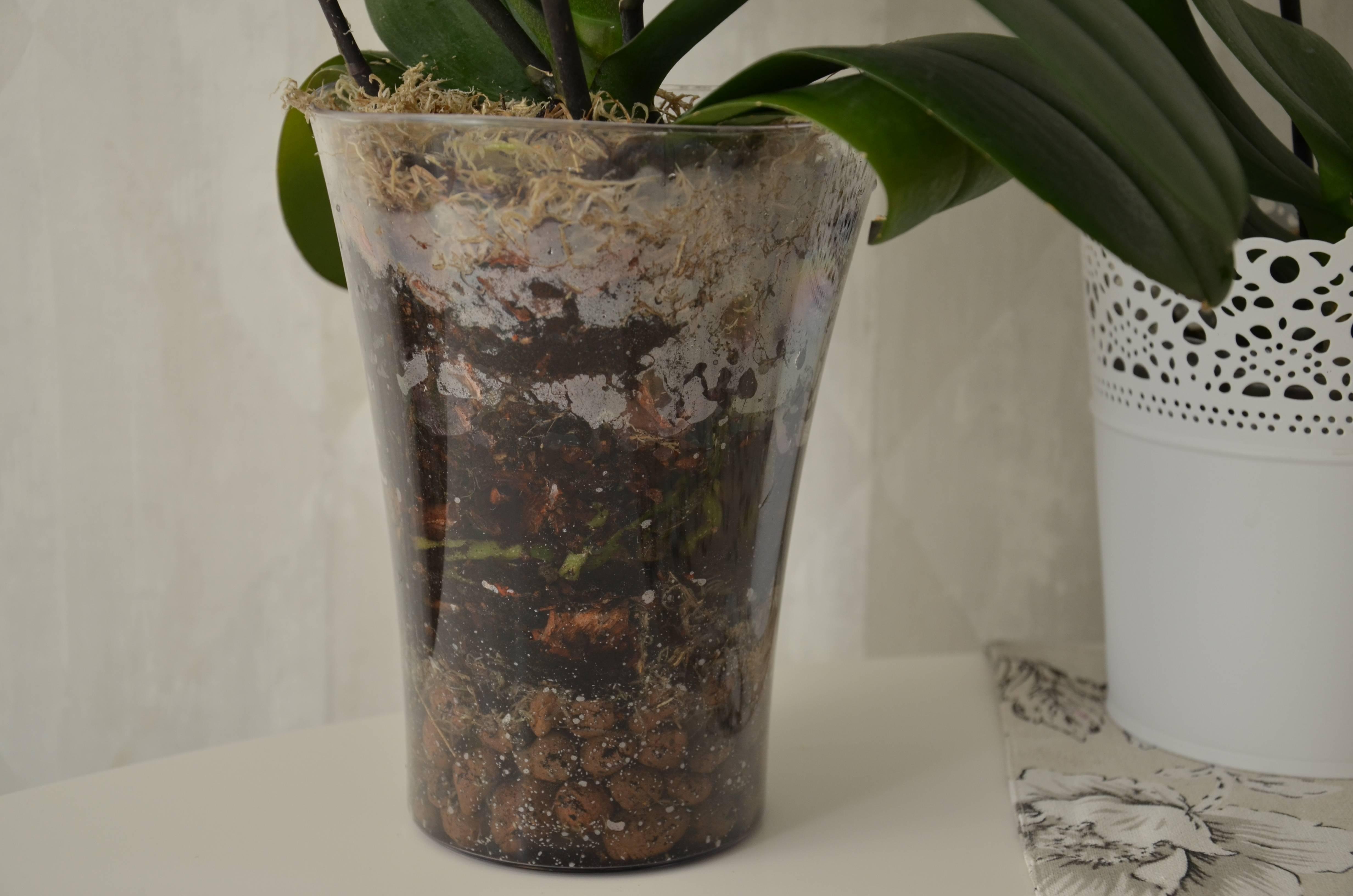 Главный вопрос: во что можно сажать орхидею?
