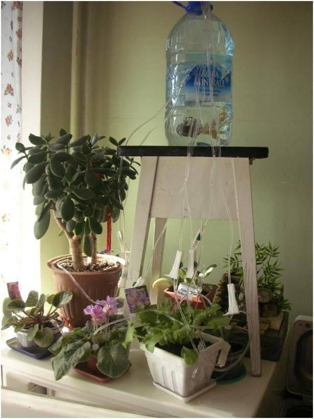 Горшки с автополивом: как пользоваться кашпо с системой самополива для орхидей и других цветов? как работает цветочный горшок с автополивом для комнатных растений?