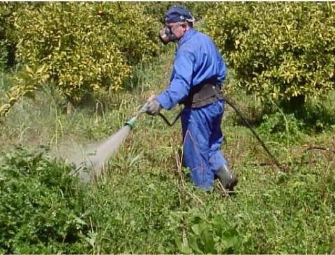 Гербициды для уничтожения деревьев - делаем правильный выбор