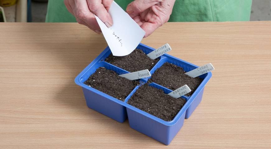 Годеция выращивание из семян когда сажать - пошаговое руководство и правила выращивания