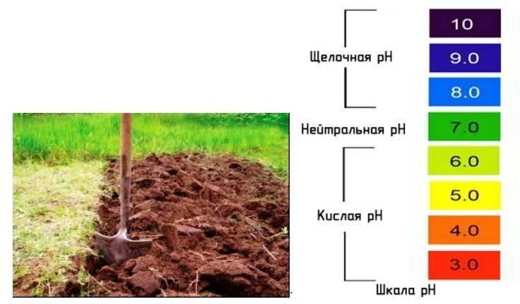 Состав готового грунта для антуриума и подготовка почвы в домашних условиях