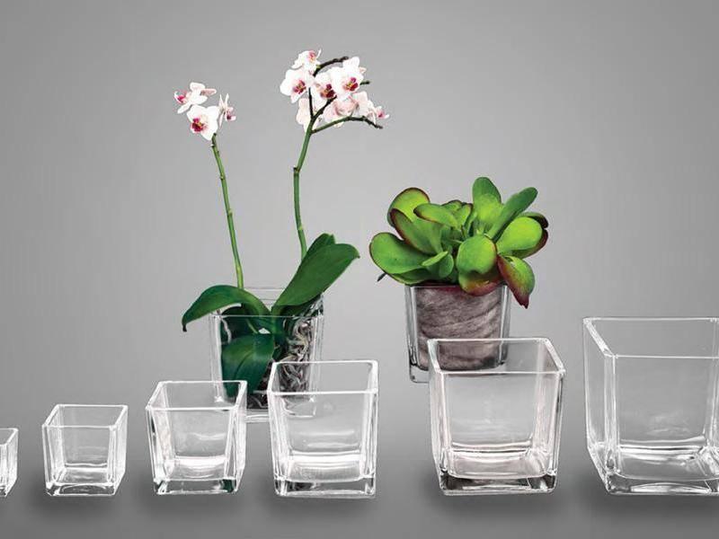 Разновидности субстратов для орхидей, лучший состав: приготовить своими руками