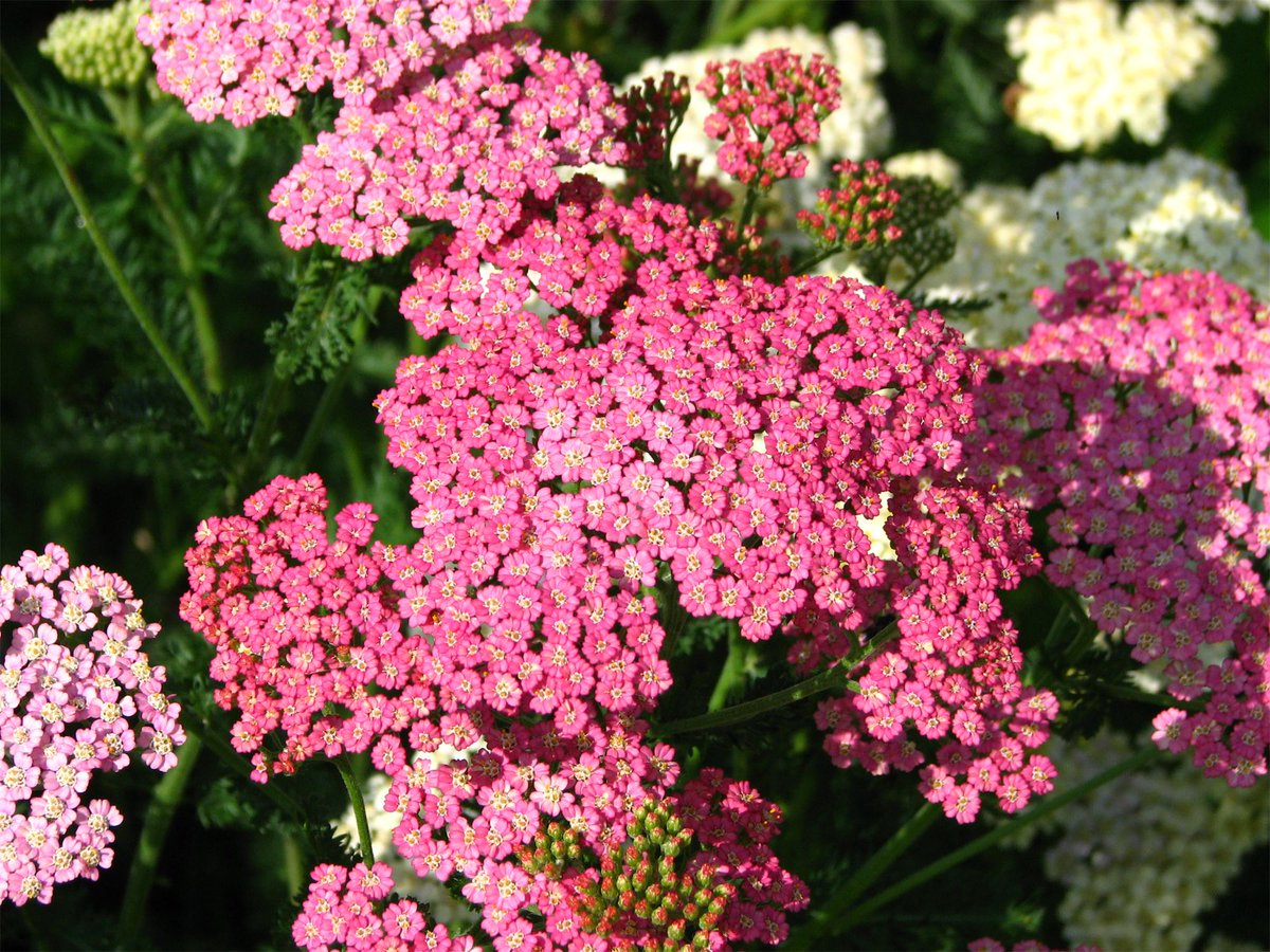 Папоротник садовый — посадка и уход на даче