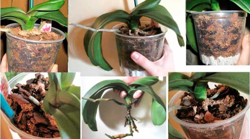 Горшок для орхидеи — какой лучше выбрать