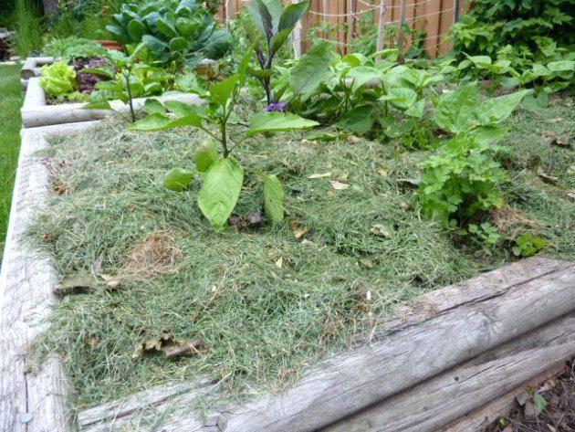 Использование древесной коры в саду, огороде и цветнике