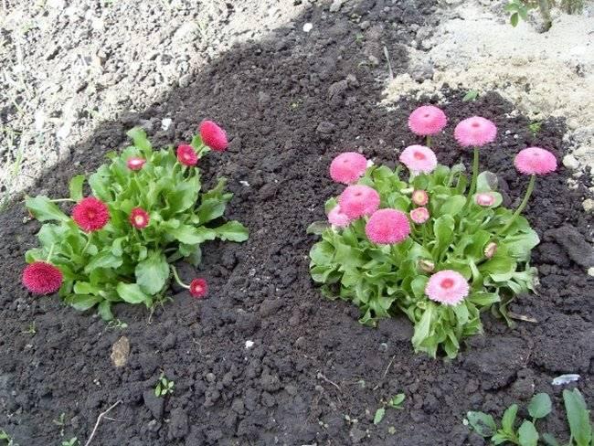 Благоприятные дни для посадки цветов в 2020 г. по лунному календарю