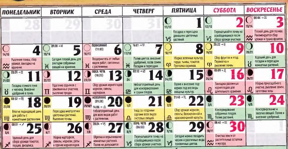 Пересадка комнатных растений: благоприятные дни, лунный календарь, технология