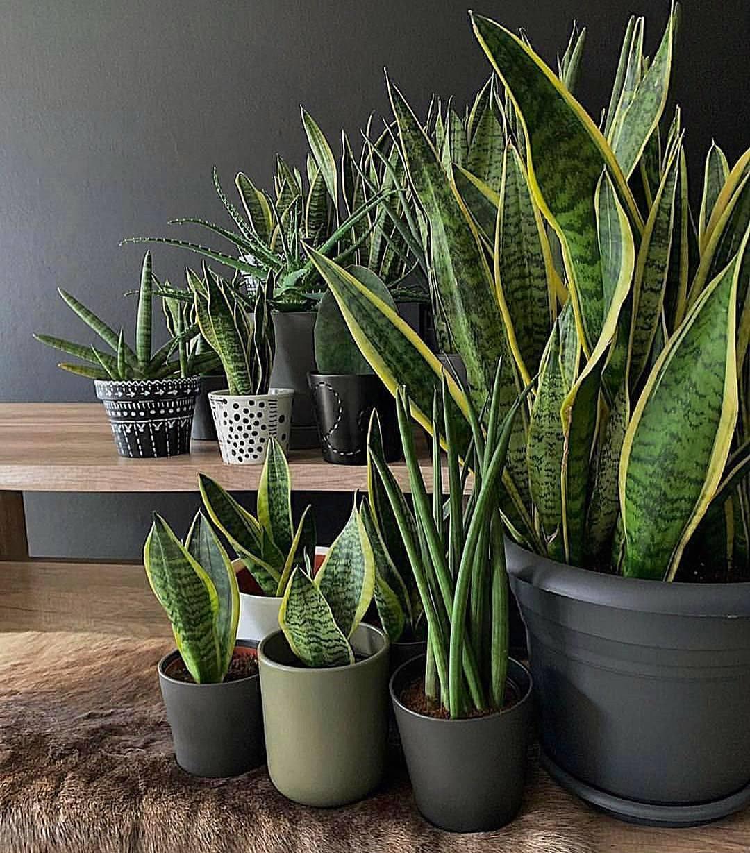 Неприхотливые комнатные растения (42 фото): названия тенелюбивых домашних цветов в горшках, красивые большие и маленькие непривередливые цветы для квартиры