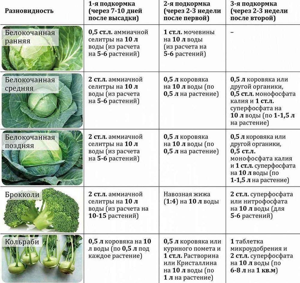 Чем подкормить фикус? какими удобрениями можно подкармливать его зимой в домашних условиях? инструкция применения удобрения bona forte и других