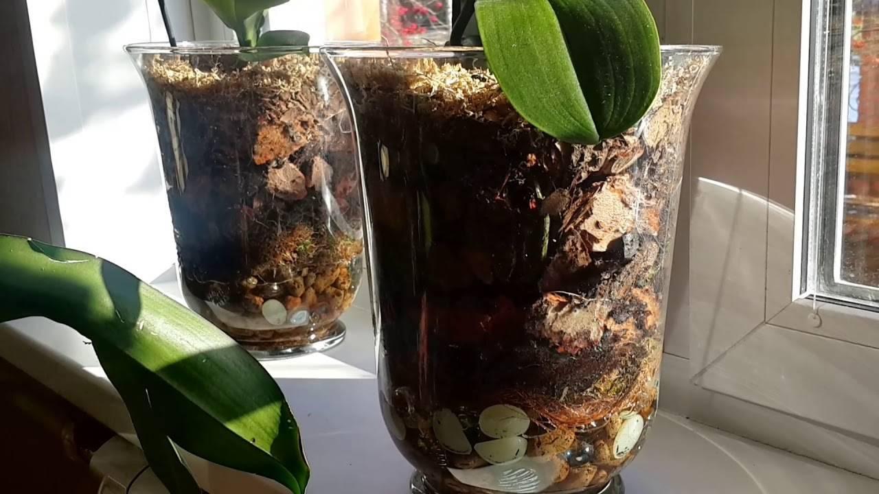 Детка орхидеи: что такое и как ее отсадить в домашних условиях?