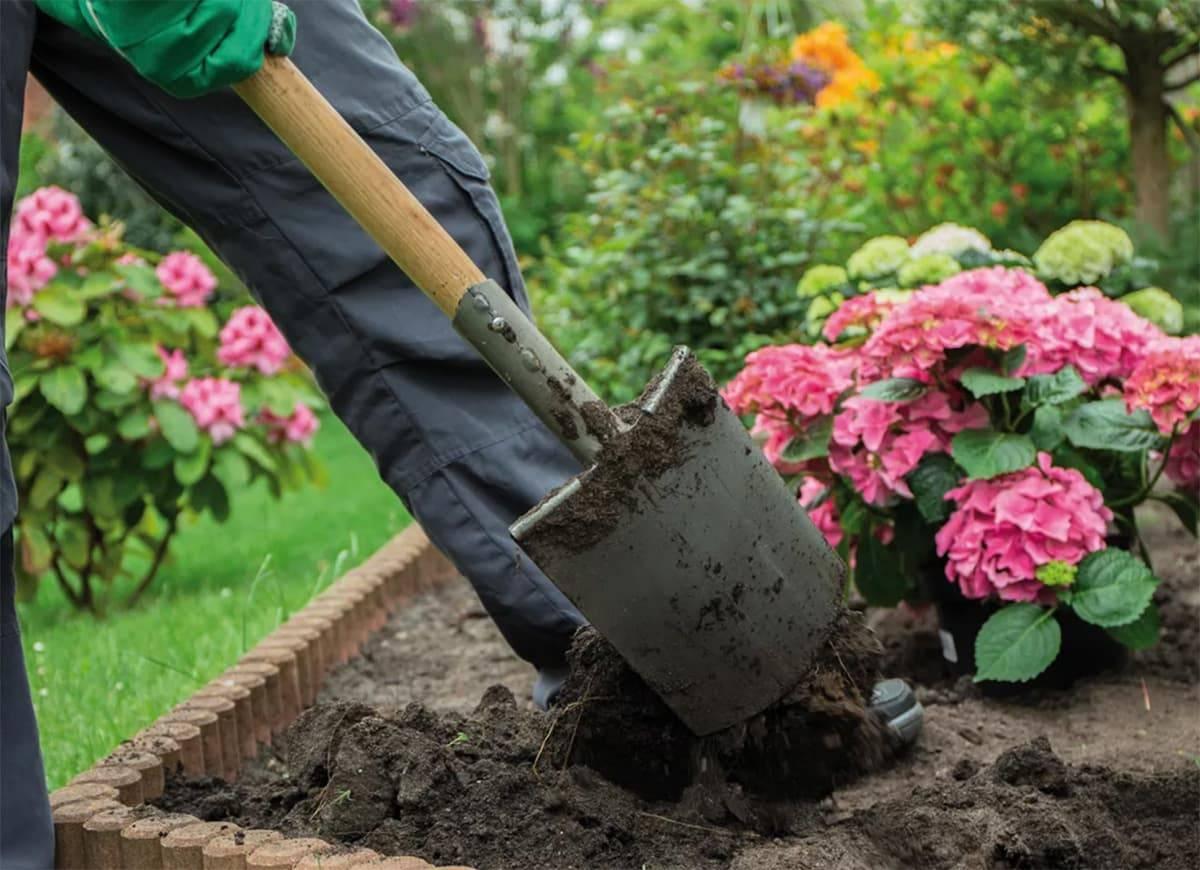 Когда и как правильно посадить саженец гортензии весной в открытый грунт