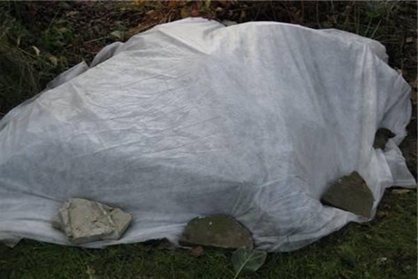 Правила подготовки гортензии к зиме: подкормка, полив, укрытие