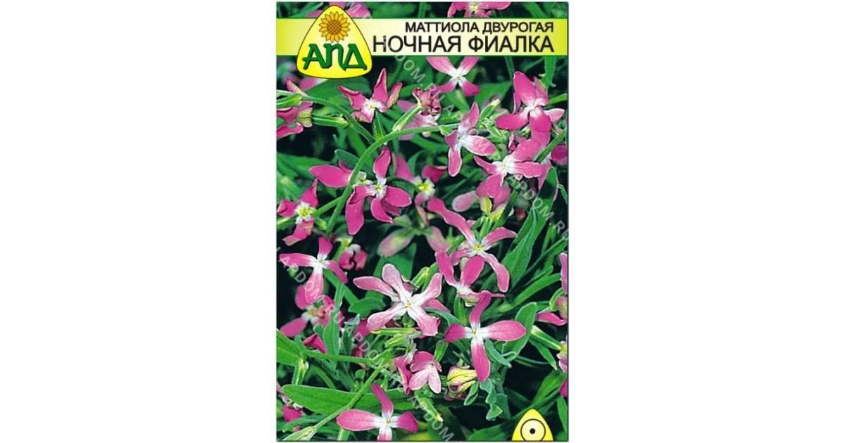 Мирабилис цветок (ночная красавица) — размножение растения