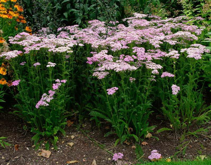 Красивый сад без лишних хлопот: неприхотливые цветы для посева на рассаду
