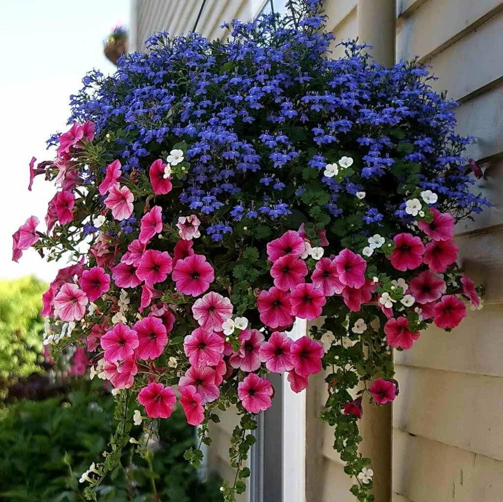 Какие цветы посадить на балконе – список названий с фотоидеями