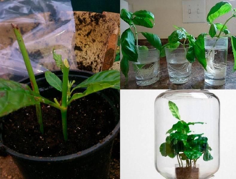 Как ухаживать за филодендроном: обзор домашних видов тропического многолетника