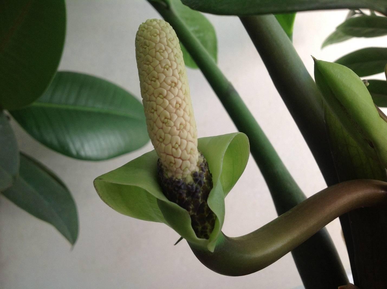 Горшок для замиокулькаса (19 фото): как выбрать размер? какая форма горшка подходит замиокулькасу? как правильно подобрать модель?