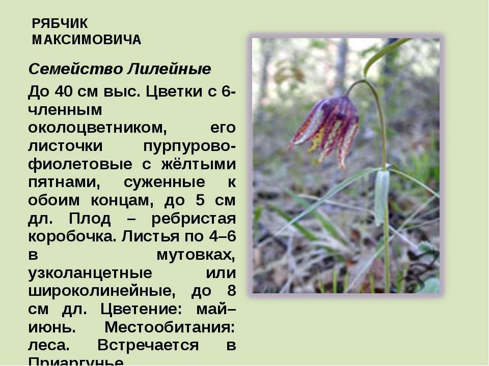 Рябчики: общая характеристика, где живёт эта птица, ее фото