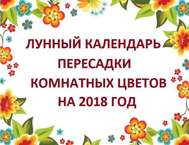 Лунный календарь посадки комнатных растений в апреле 2020 года: благоприятные дни