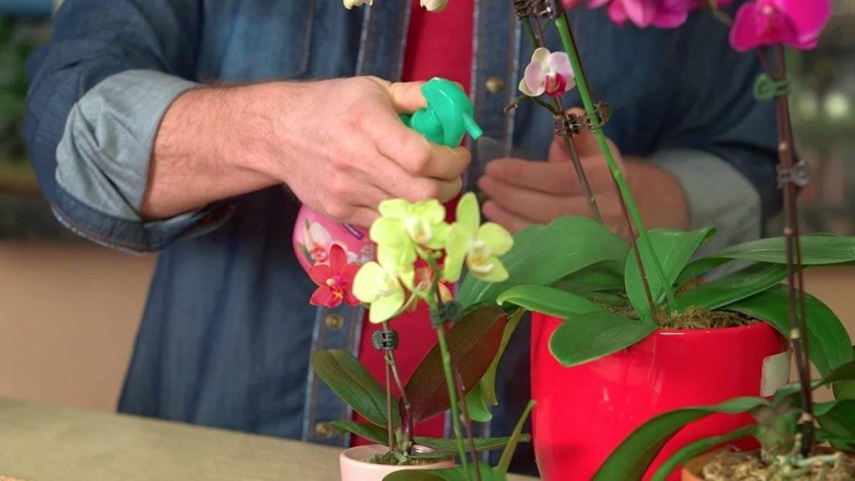 Комнатная орхидея: уход и размножение. как ухаживать за комнатной орхидеей