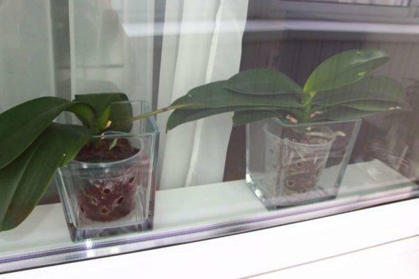 Грунт для орхидей: требования к почве и варианты в домашних условиях
