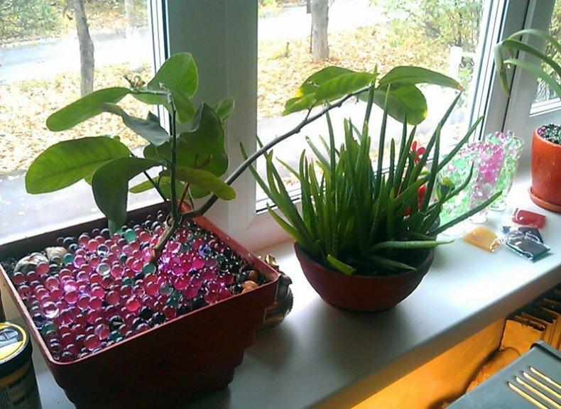 Как поливать комнатные растения во время отпуска?