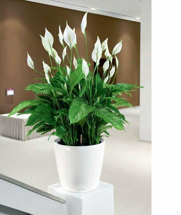 Как правильно подобрать тенелюбивые комнатные цветы?