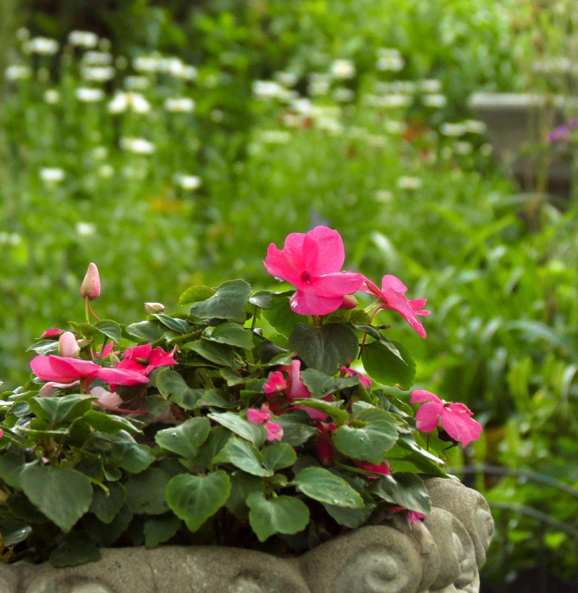 Сколько площади нужно каждому многолетнику (схемы посадки растений)