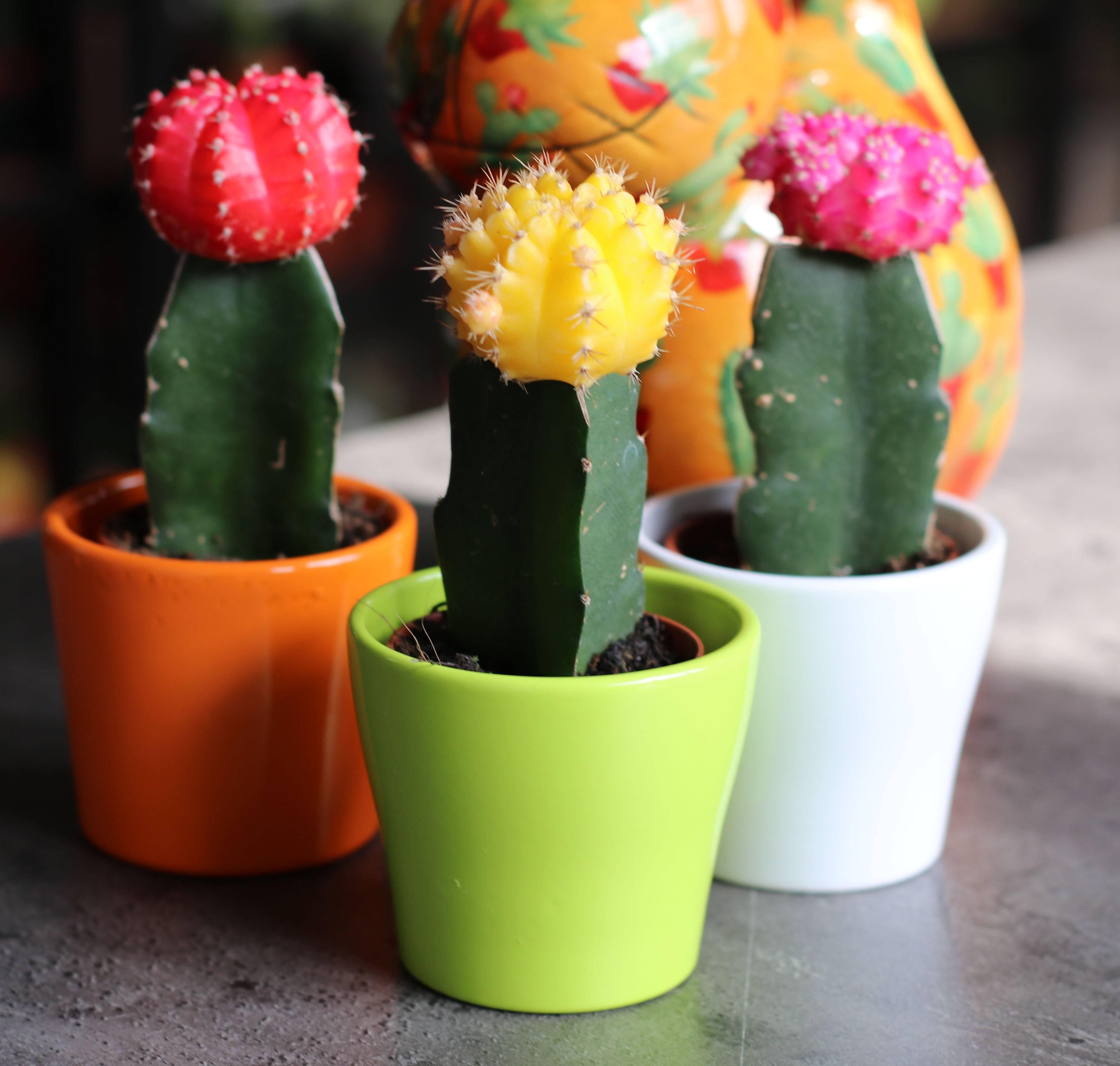 Как ухаживать за кактусом: примеры в домашних условиях