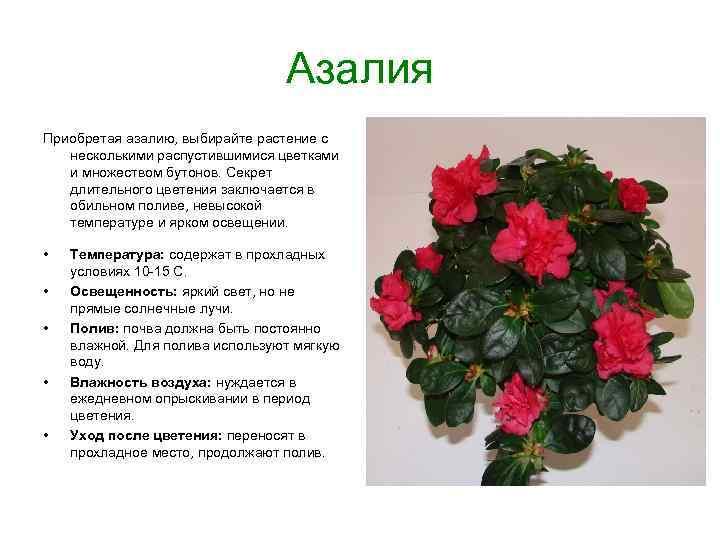 Цветок дизиготека: фото растения, уход в домашних условиях, методы размножения семенами и черенками