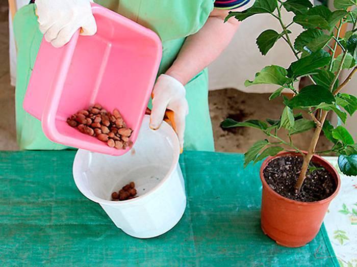 Почвопокровные розы (55 фото): что это такое? особенности ухода и выращивания, использование цветущих все лето роз в ландшафтном дизайне. как укрыть растения на зиму?
