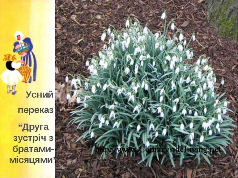 Подснежник: виды и сорта, выращивание и способы размножения