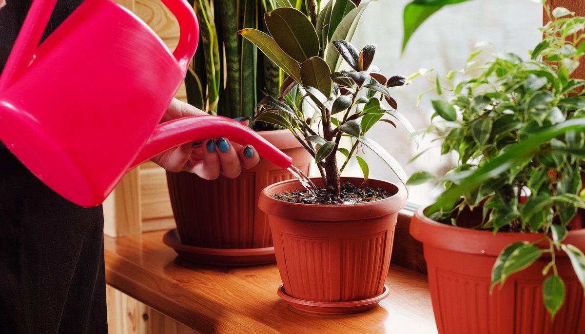 Цветы кордилина: виды на фото с описанием прямой, южной, австралийской, красной, микс и других