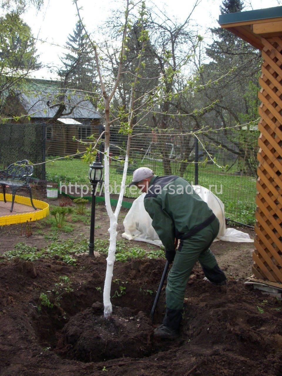 10 правил посадки плодовых деревьев