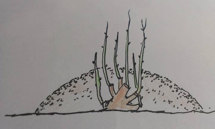 Как ухаживать за крыжовником весной после зимы: основные весенние работы на даче