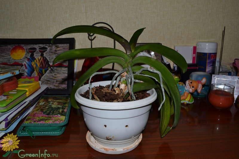 Как правильно выбрать горшок для орхидеи - практические рекомендации